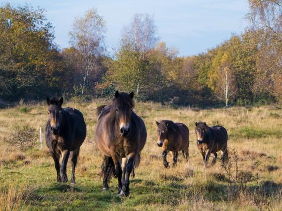 Dartmoor-1470791