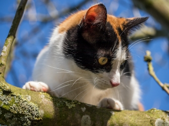 Katze-1220986