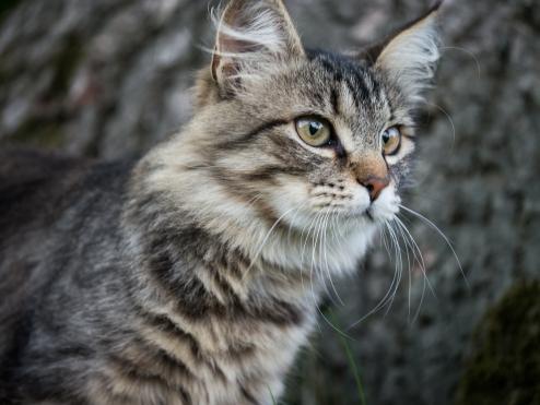 Katze-1550498