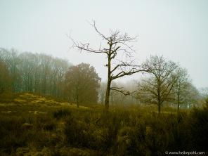 Heidelandschaft im Spätherbst