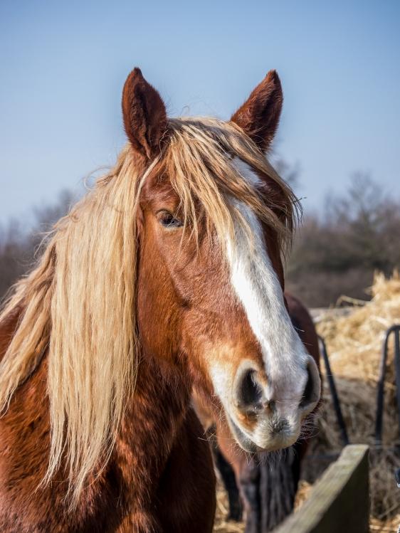 Pferd-1220671