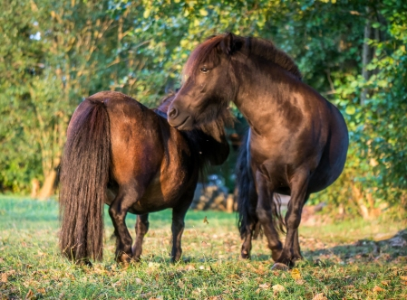 Pony-1380589 Kopie