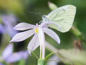 Schmetterling-1390334