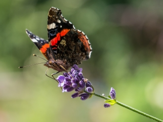 Schmetterling-1390706