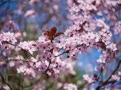 Blüten-1510511