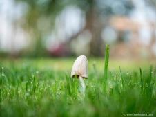 Und den ganzen Sommer über immer wieder kleine, zarte Pilze
