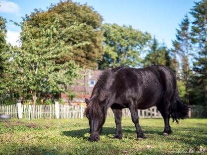 Ponys-1077318