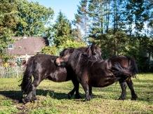 Ponys-1077367